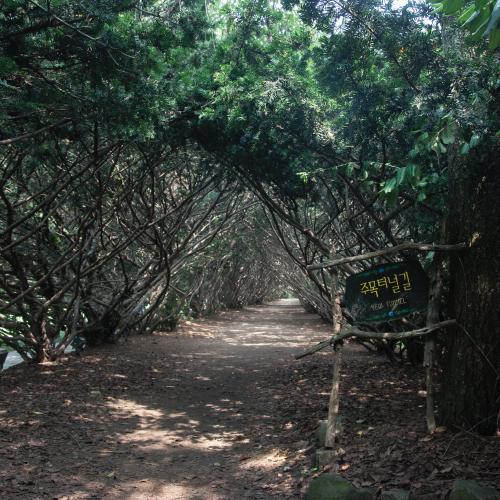 장수주목터널